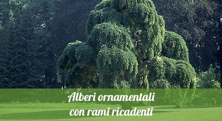 Alberi nani da giardino alberi nani da giardino la casa for Alberi da piantare in giardino