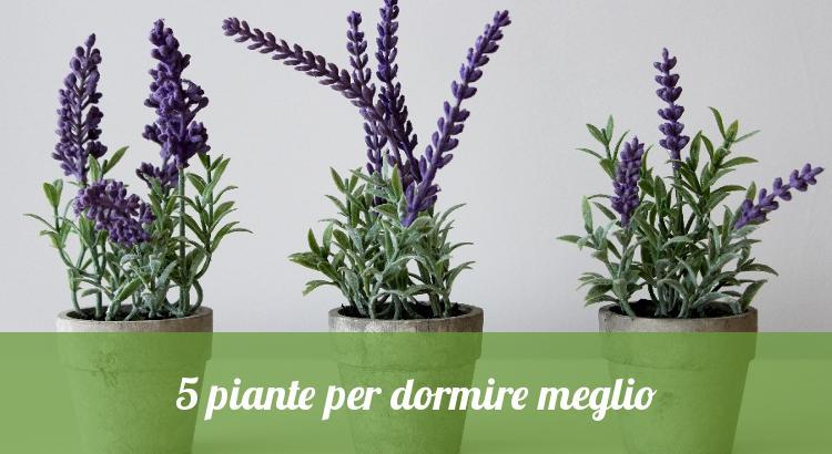 5 piante per dormire meglio - Orto24