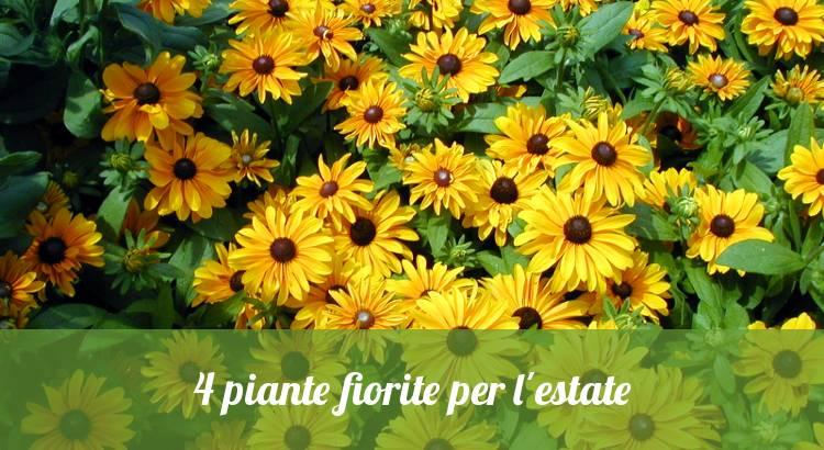Piante fiorite estive, colorate e vivaci.