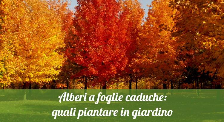 Alberi A Crescita Rapida Perfect Download By Size Handphone Tablet