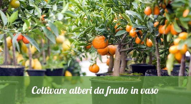 Coltivare alberi da frutto in vasi e contenitori.