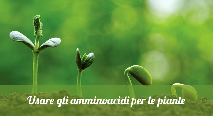 L'uso di amminoacidi nella coltivazione delle piante.