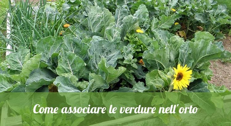 Come associare le verdure nell'orto.