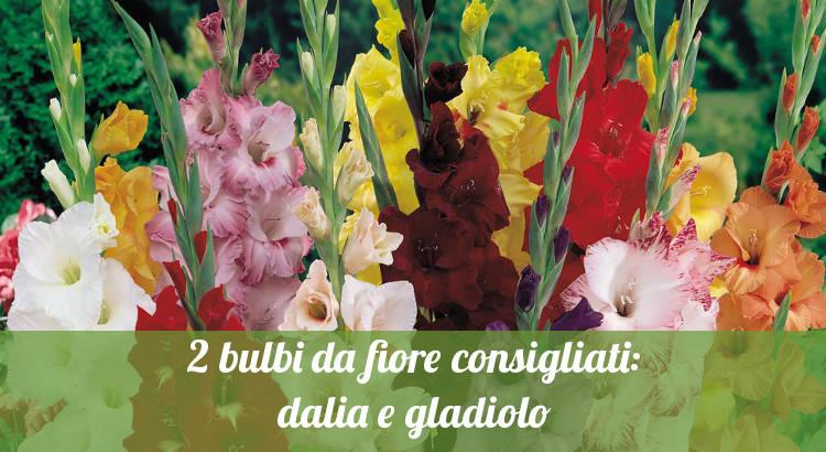 I gladioli, bulbi da fiore consigliati.