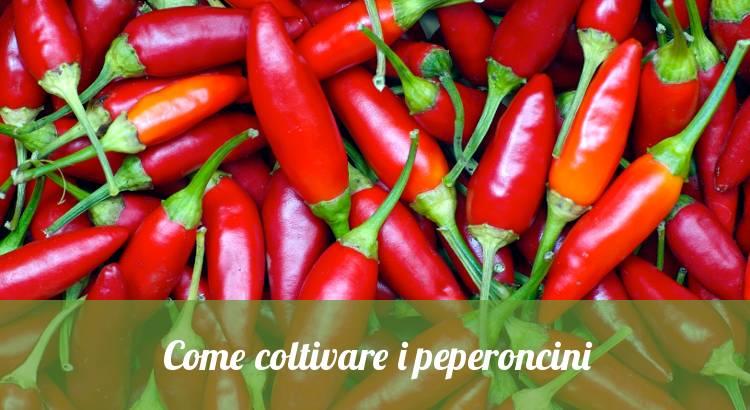 Come coltivare le piante di peperoncino.