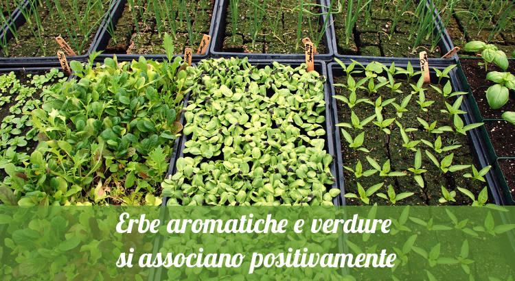 Erbe aromatiche e verdure associate insieme nell'orto.