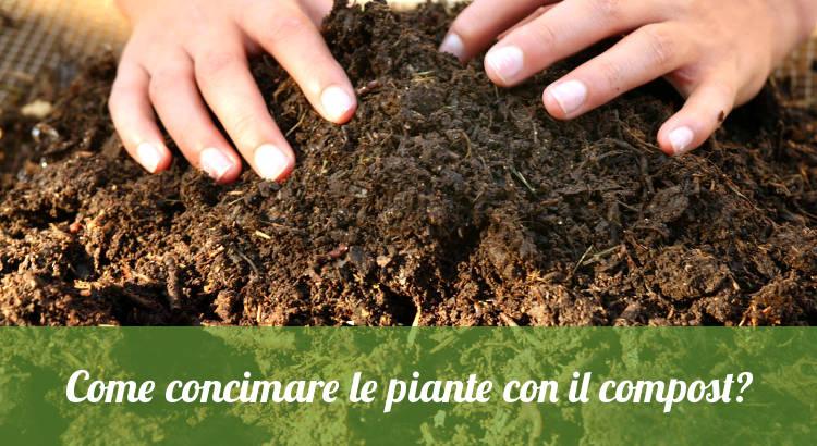 Compost domestico per concimare le piante.