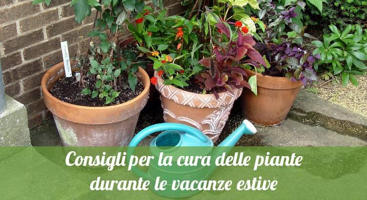 Curare le piante durante le ferie estive.