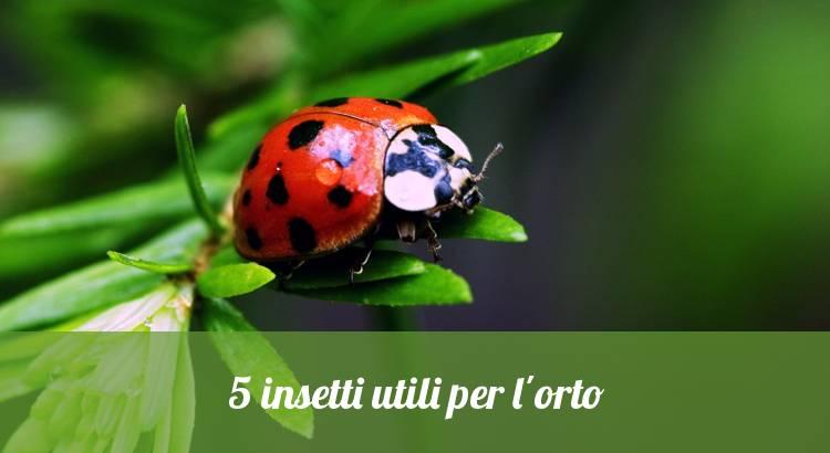 Coccinelle, insetti utili contro gli afidi.