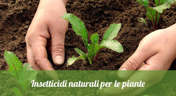 Rimedi naturali contro i parassiti delle piante.