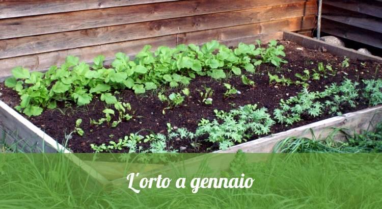 L'orto a gennaio, semi e piatine in inverno.