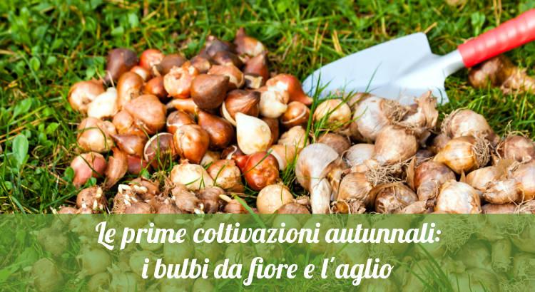 Coltivazioni autunnali: bulbi e aglio.