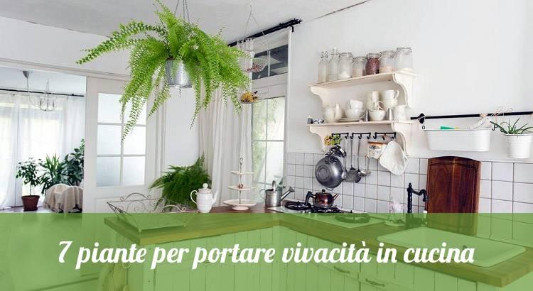 7 piante per portare vivacità in cucina - Orto24