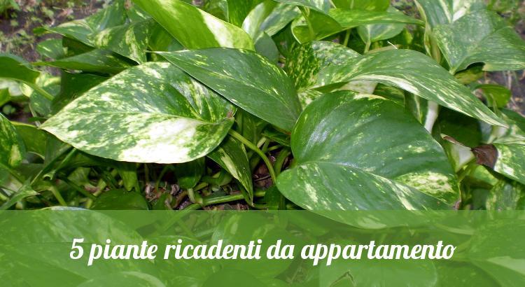 Piante Verdi Da Appartamento Foto.5 Piante Ricadenti Da Appartamento Orto24