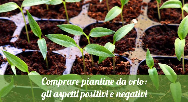 Comprare piante da orto.