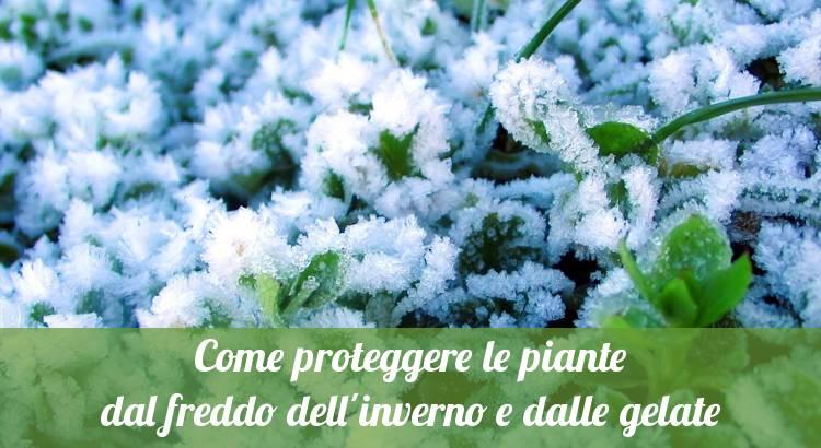 Proteggere le piante in inverno dalle gelate.