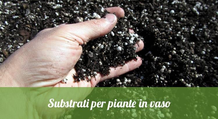 Substrati per piante.