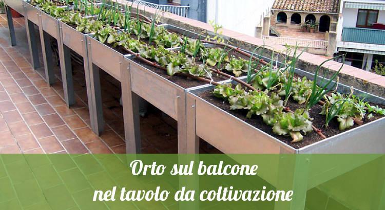 Orto sul balcone nel tavolo da coltivazione - Orto24