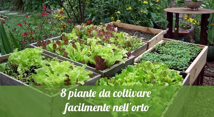 Verdure e ortaggi da coltivare facilmente in orto.